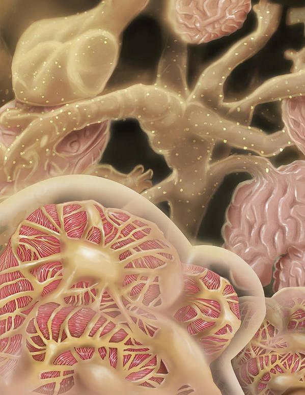 Nephron Art Print featuring the digital art Artist Depcition Of Glomerulus by Alan Gesek/stocktrek Images