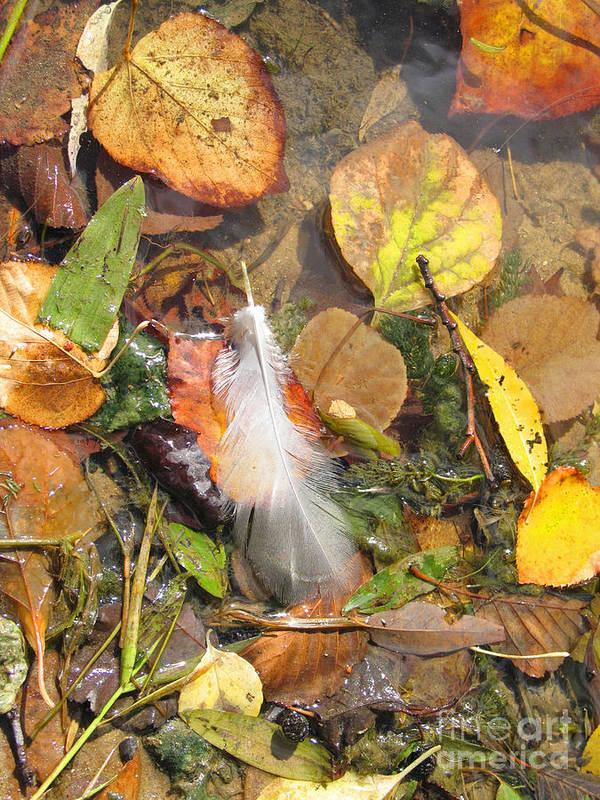 Autumn Art Print featuring the photograph Autumn Leavings by Ann Horn