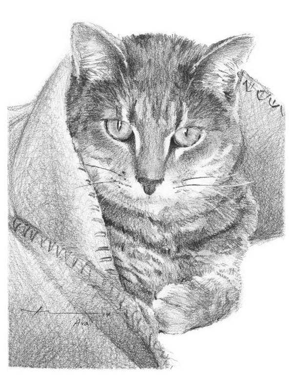 <a Href=http://miketheuer.com Target =_blank>www.miketheuer.com</a> Cat In A Blanket Pencil Portrait Art Print featuring the drawing Cat In A Blanket Pencil Portrait by Mike Theuer