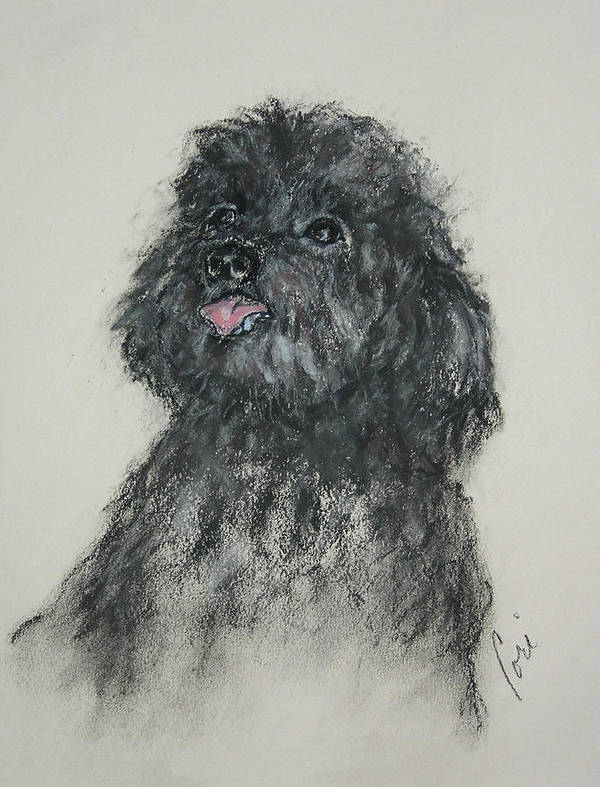 Poodle Art Print featuring the drawing Gigi by Cori Solomon