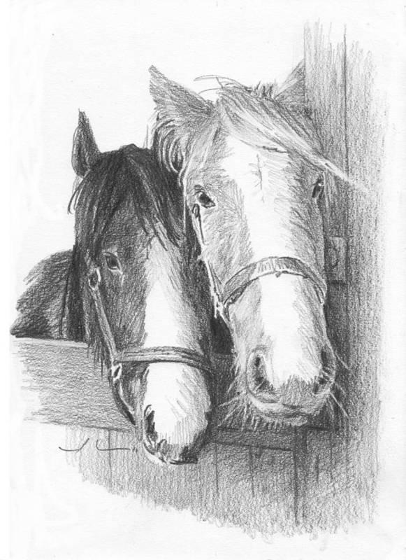 <a Href=http://miketheuer.com Target =_blank>www.miketheuer.com</a> Horse Friends Pencil_portrait Art Print featuring the drawing Horse Friends Pencil_portrait by Mike Theuer