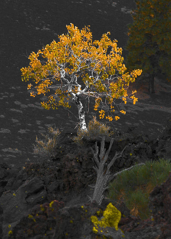 Tree Art Print featuring the photograph Lava Field by Jim Painter