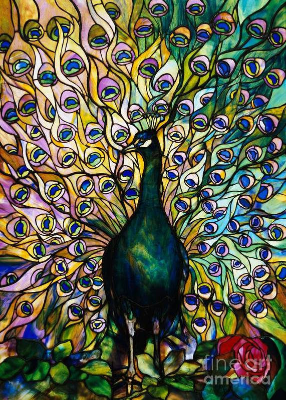 Peacock Art Print featuring the photograph Peacock by American School
