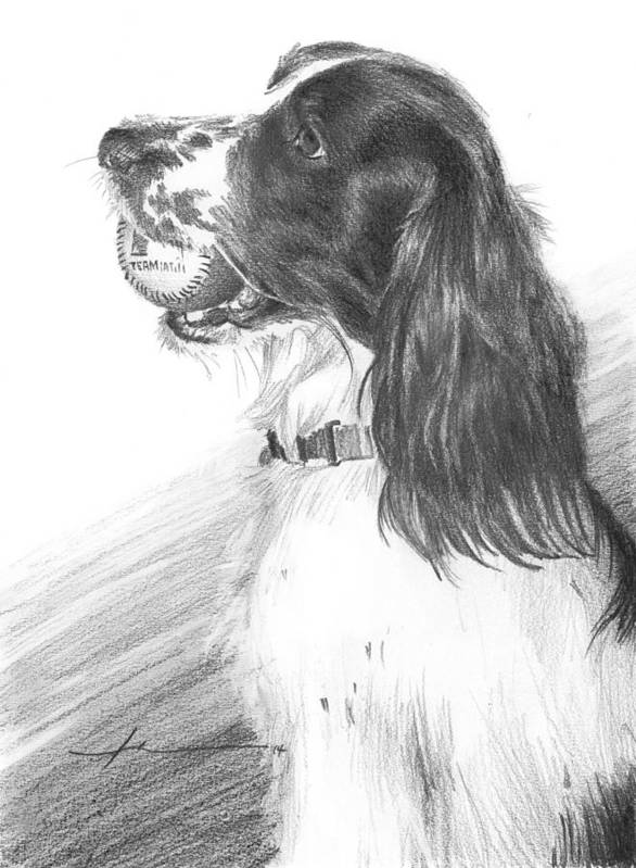 <a Href=http://miketheuer.com Target =_blank>www.miketheuer.com</a> Art Print featuring the drawing Springer Spaniel Playing Fetch Pencil Portrait by Mike Theuer
