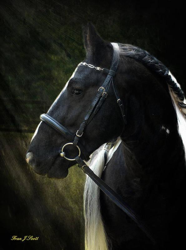 Horses Art Print featuring the photograph Val Headshot by Fran J Scott