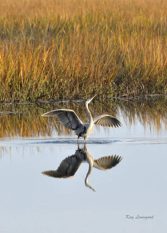 Great Blue Heron Art Print featuring the photograph Bird Dance by Kay Lovingood