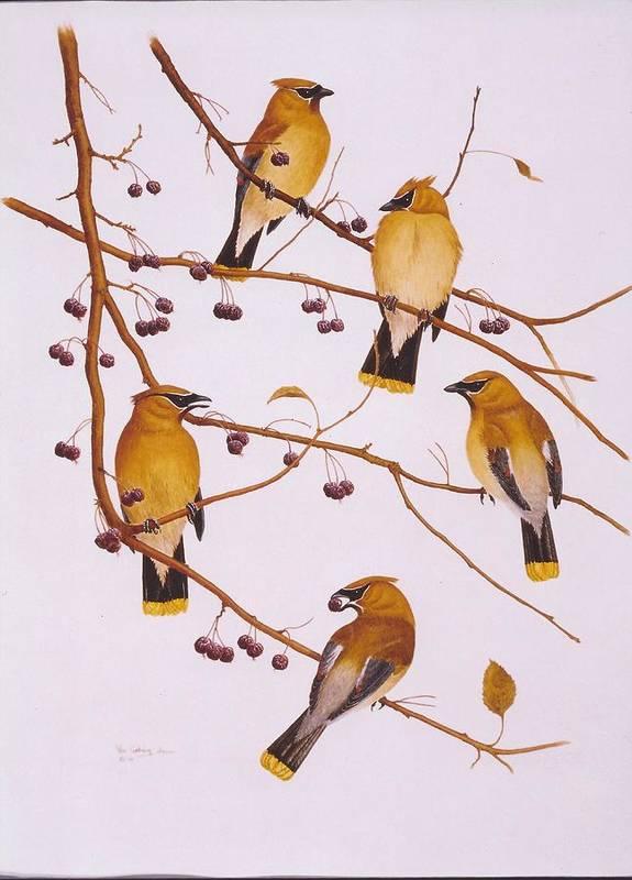 Birds Art Print featuring the painting Cedar Waxwing Flock by Bill Gehring