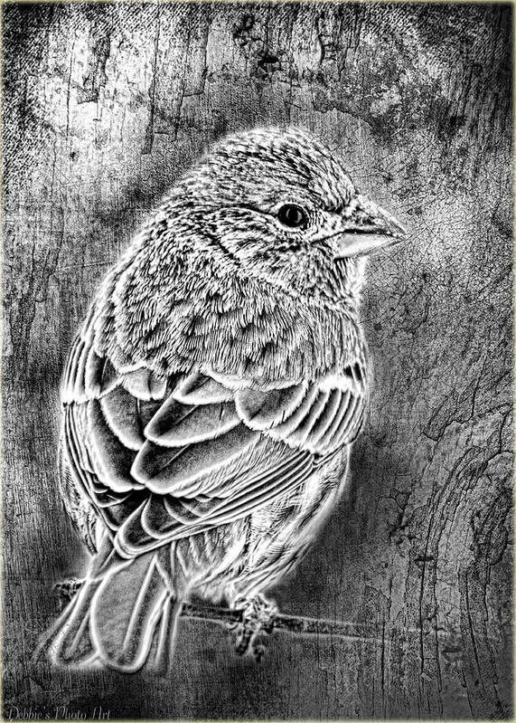 Nature Art Print featuring the photograph Finch Grungy Black And White by Debbie Portwood