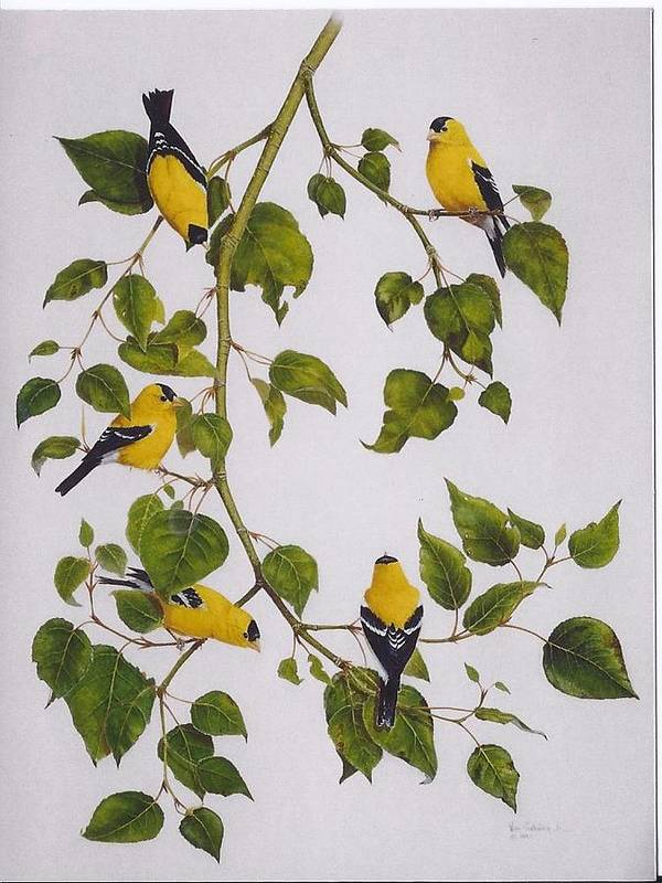 Goldfinches Art Print featuring the painting Goldfinches by Bill Gehring