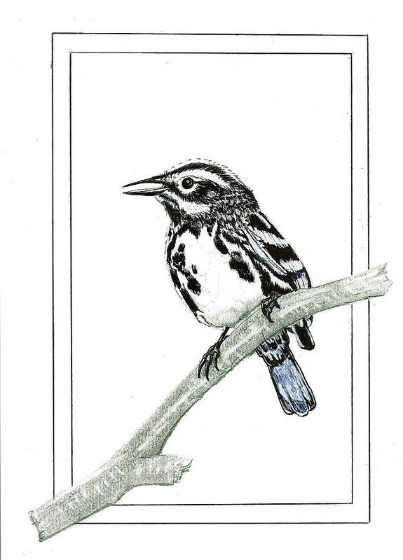 Art Print featuring the drawing Perched by Harry Richards