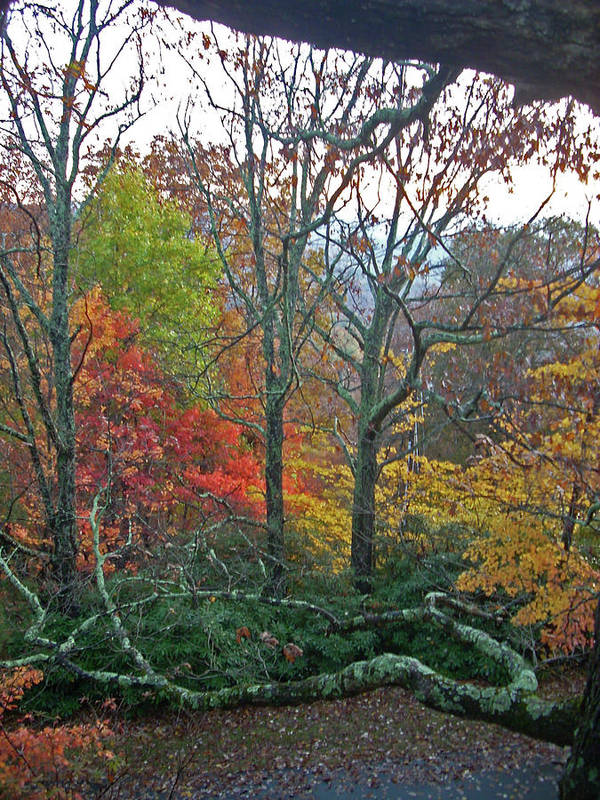 Trees Art Print featuring the photograph Fall in the NC Mountains by Beebe Barksdale-Bruner