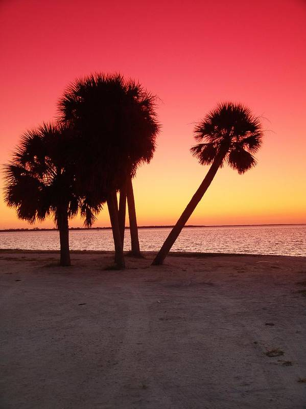 Tropical Art Print featuring the photograph Florida Gulf Sunset by Florene Welebny
