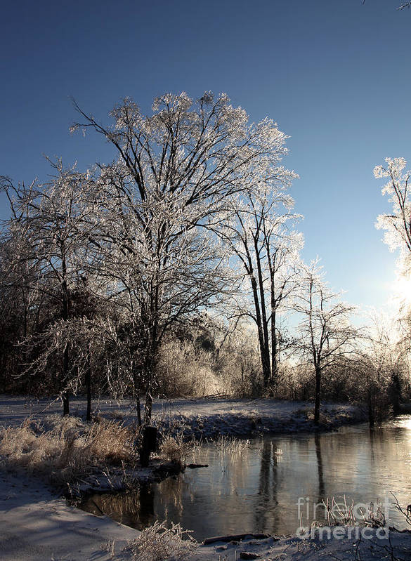 Trees Art Print featuring the photograph Trees In Ice Series by Amanda Barcon