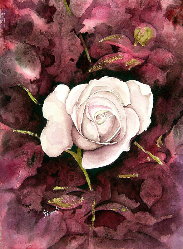 Flower Art Print featuring the painting A White Rose by Sam Sidders