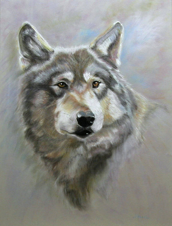 Pastel Art Print featuring the pastel Austin's Wolf by Laura Gabel
