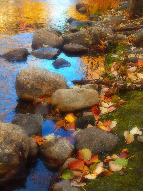 Autumn Art Print featuring the photograph Autumn By The Creek by Tara Turner