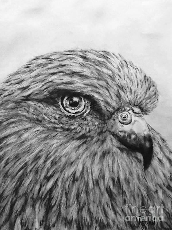 Birds Art Print featuring the drawing Bird by Regan J Smith