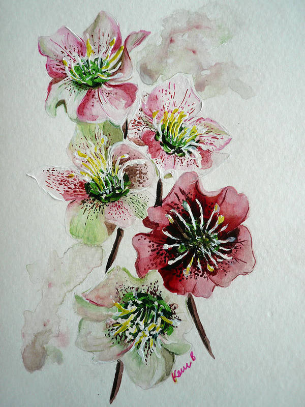Floral Flower Pink Art Print featuring the painting Christmas Rose by Karin Dawn Kelshall- Best