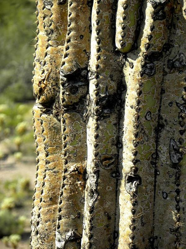 Photograph On Paper Art Print featuring the photograph Desert Cactus 6 by Patricia Bigelow