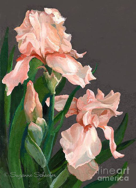 Flowers Art Print featuring the painting Iris Study by Suzanne Schaefer