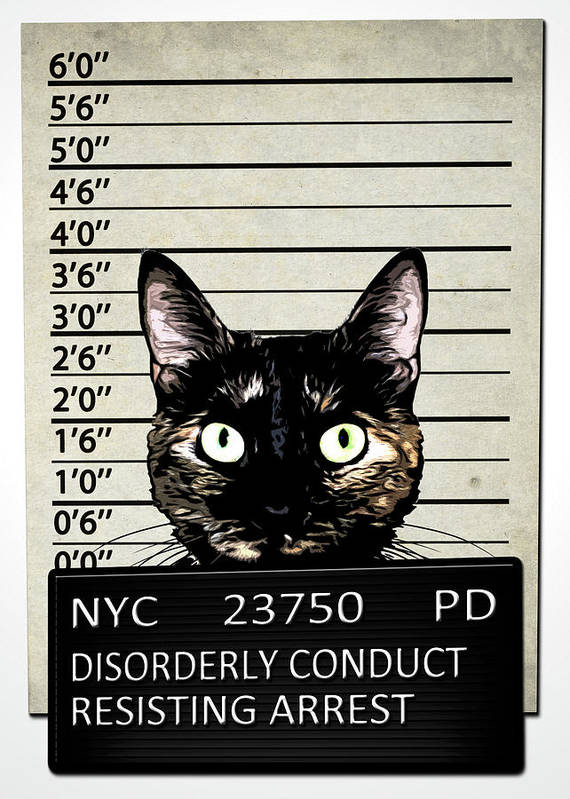 Cat Art Print featuring the mixed media Kitty Mugshot by Nicklas Gustafsson