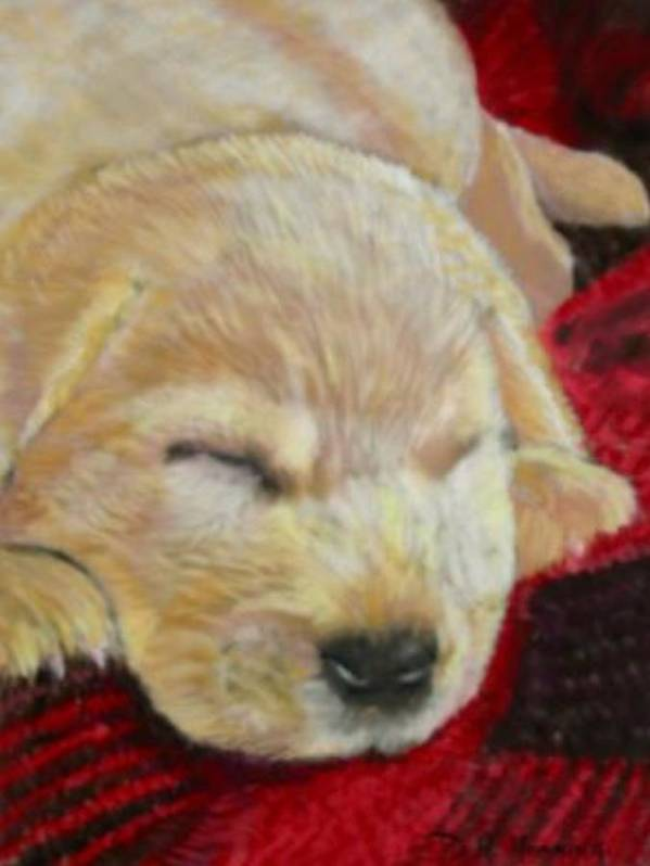 Dog. Dog Portrait Art Print featuring the painting Mellow Yellow by David Horning