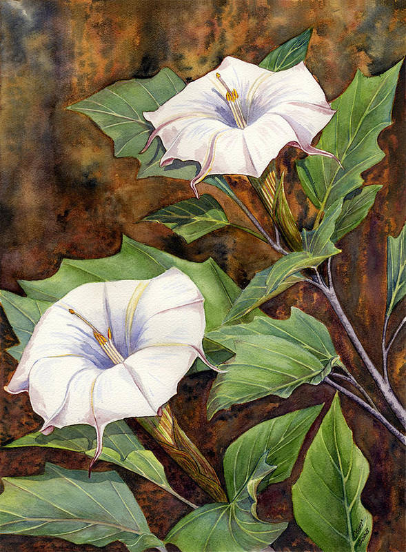Sacred Datura Art Print featuring the painting Moon Lilies by Catherine G McElroy