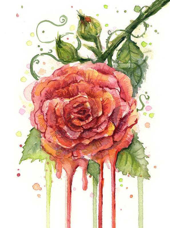 Rose Art Print featuring the painting Red Rose Dripping Watercolor by Olga Shvartsur