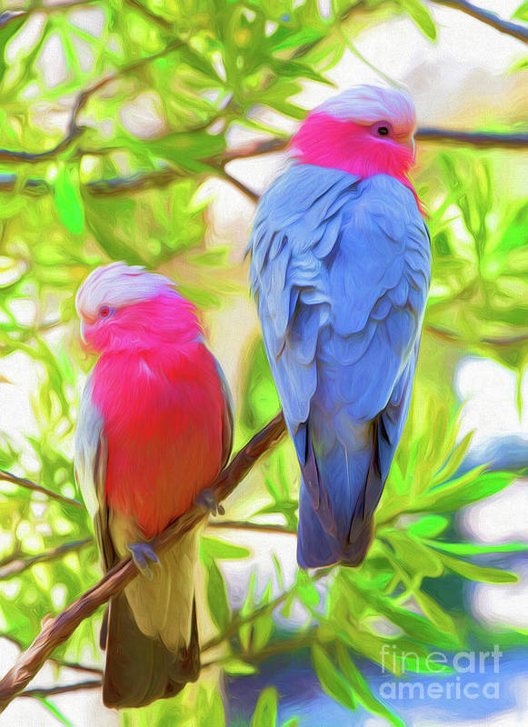Galahs Art Print featuring the photograph Rose cockatoos by Sheila Smart Fine Art Photography