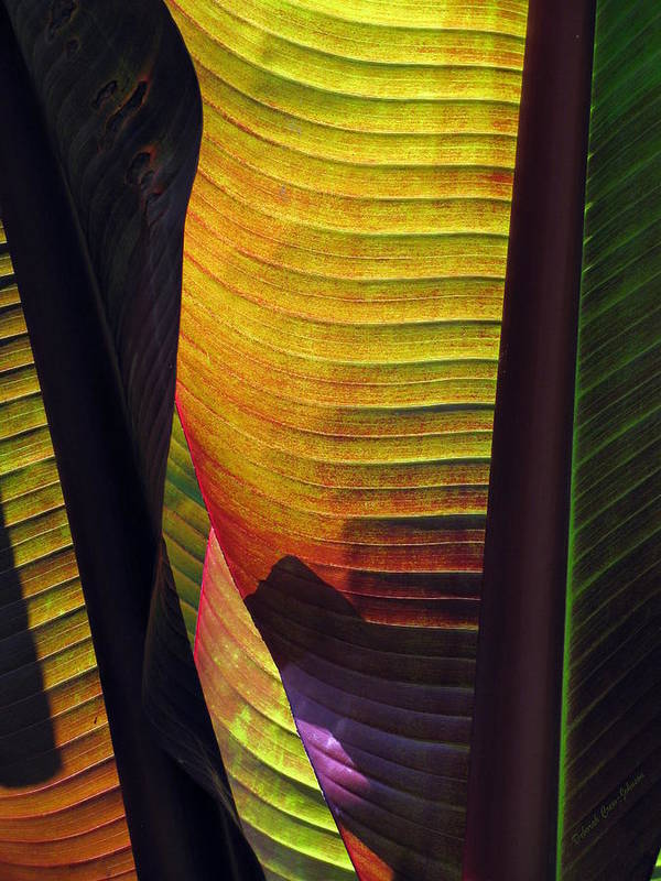 Leaf Art Print featuring the photograph Shade by Deborah Crew-Johnson