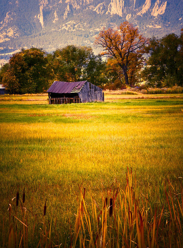 Shed Art Print featuring the photograph Shed in Sunlight by Marilyn Hunt