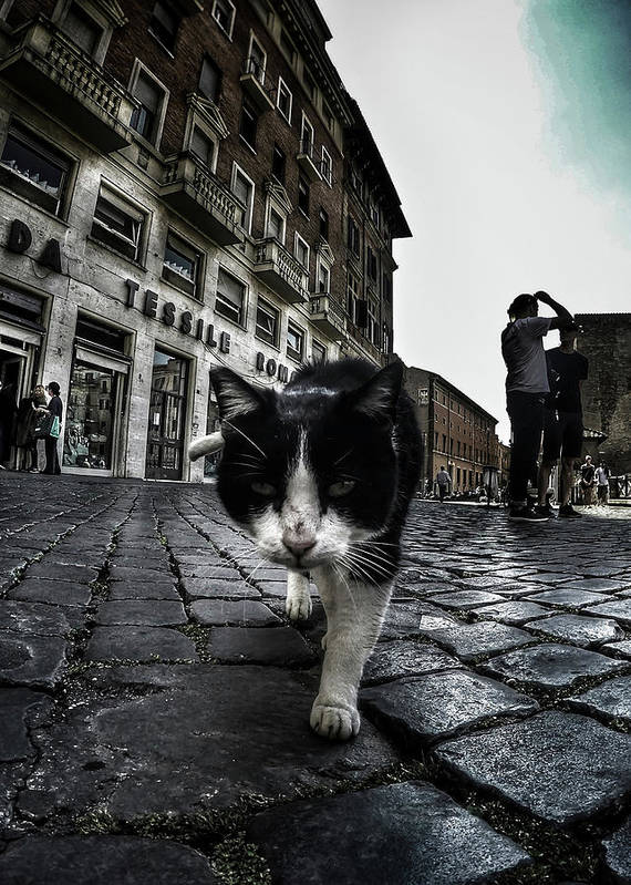 Cat Art Print featuring the photograph Street Cat by Nicklas Gustafsson