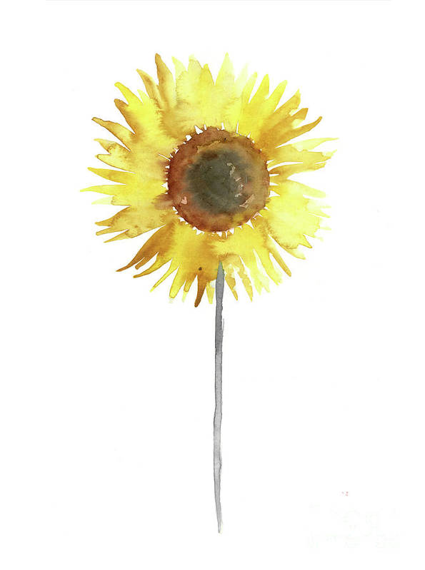 Sunflower Floral Display Yellow Brown Gray Watercolor Painting by Joanna Szmerdt