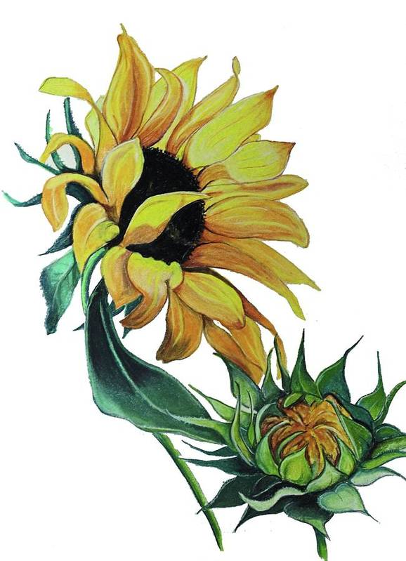 Floral Art Print featuring the drawing Sunflower by Karin Dawn Kelshall- Best