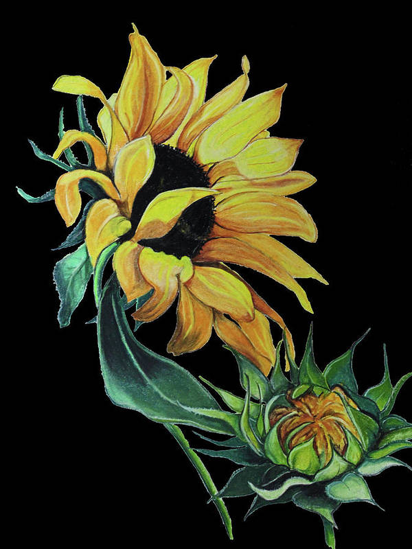 Sunflower Art Print featuring the pastel Sunflower On Black by Karin Dawn Kelshall- Best