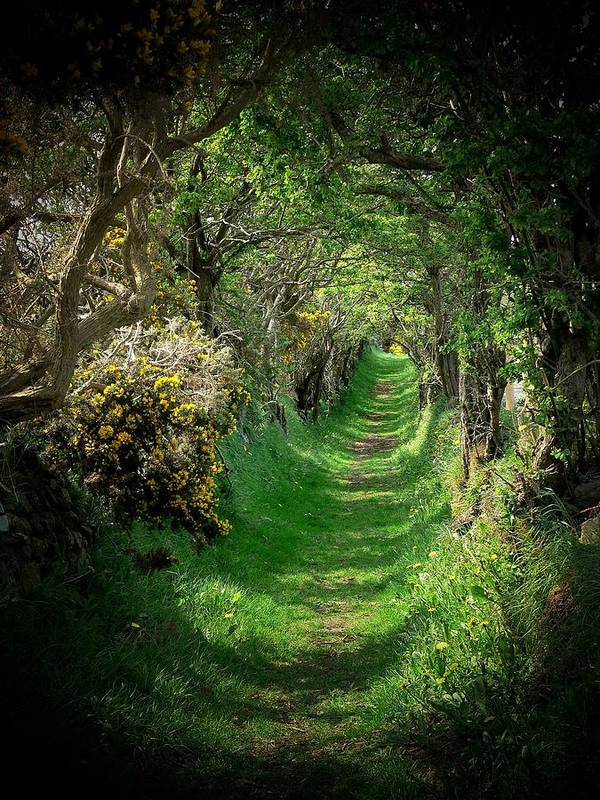 Old Road Art Print featuring the photograph The Old Road by Cat Shatwell