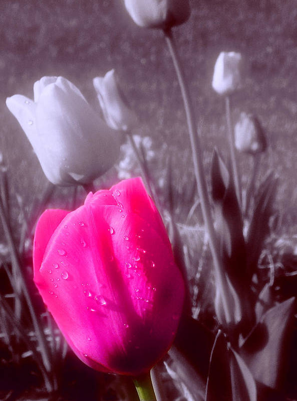 Flower Art Print featuring the photograph Uniqueness by Kenneth Krolikowski
