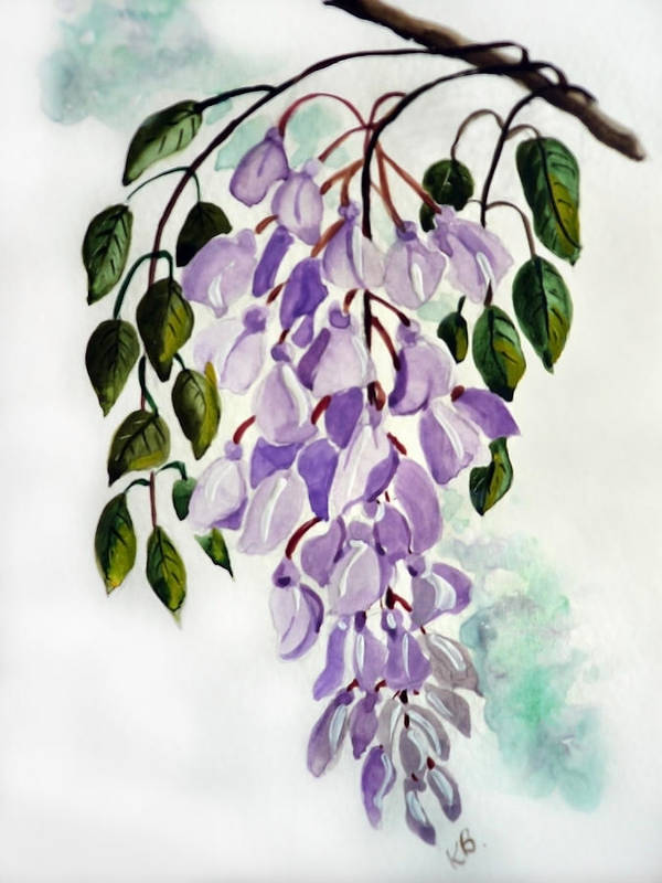 Floral Paintings Flower Paintings Wisteria Paintings Botanical Paintings Flower Purple Paintings Greeting Card Paintings  Art Print featuring the painting Wisteria by Karin Dawn Kelshall- Best