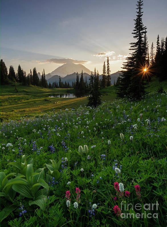 Mt. Rainier Art Print featuring the photograph Sunbeams Over Rainier by Mike Dawson