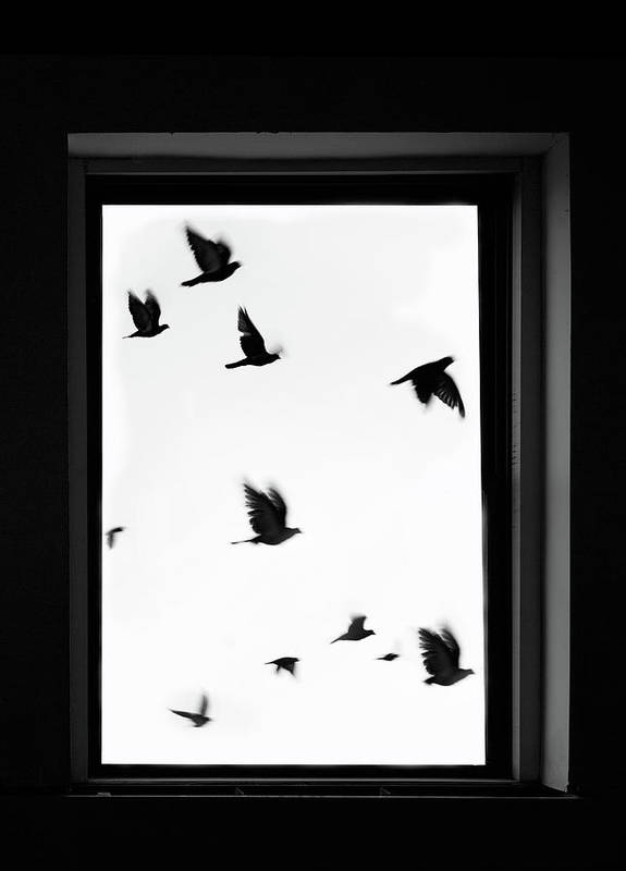 Spooky Art Print featuring the photograph Flock Of Crows Seen Through A Window by Grant Faint