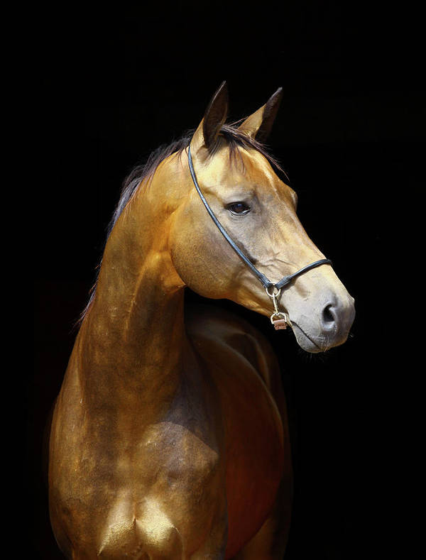 Horse Art Print featuring the photograph Golden Horse by Photographs By Maria Itina