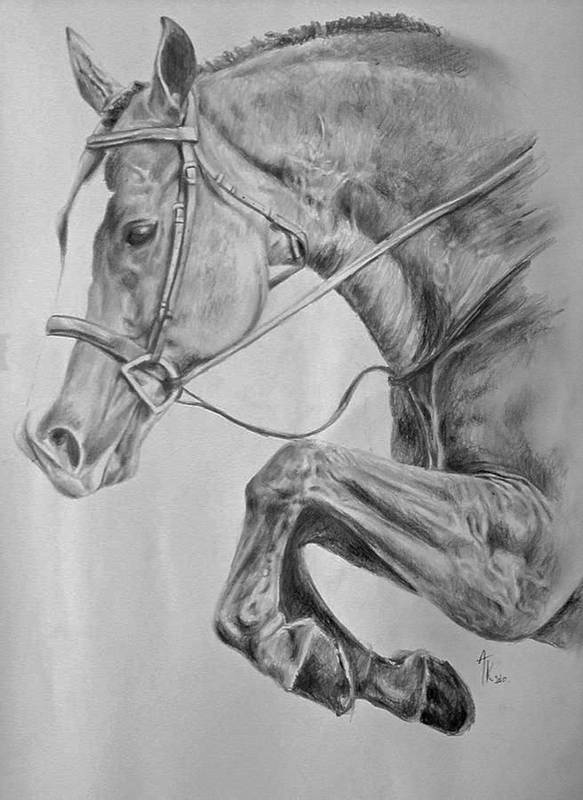 Horse Pencil Drawing Art Print By Arion Megid Khedhiry