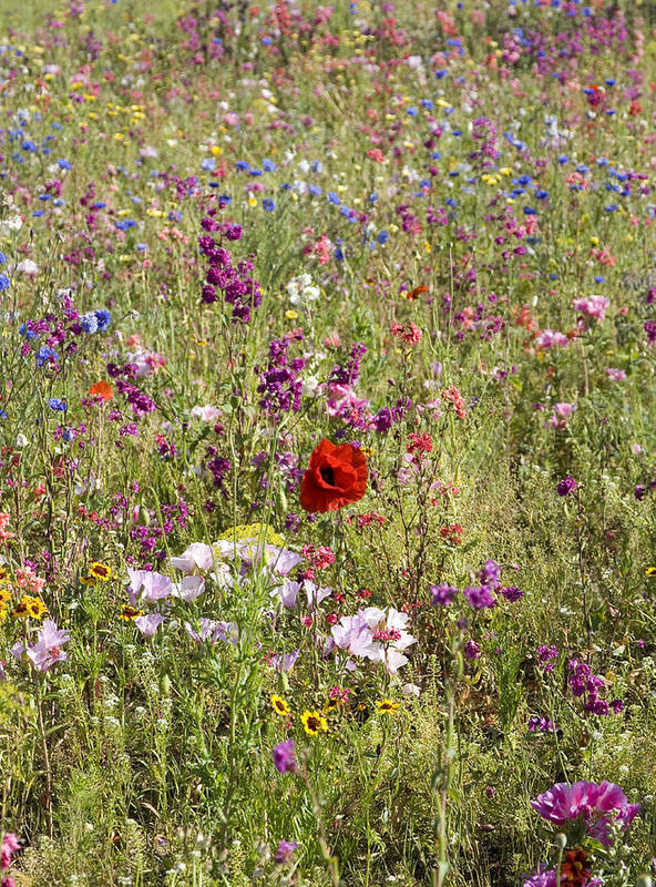 Outdoors Art Print featuring the photograph Mixed colourful wildflowers by Lyn Holly Coorg