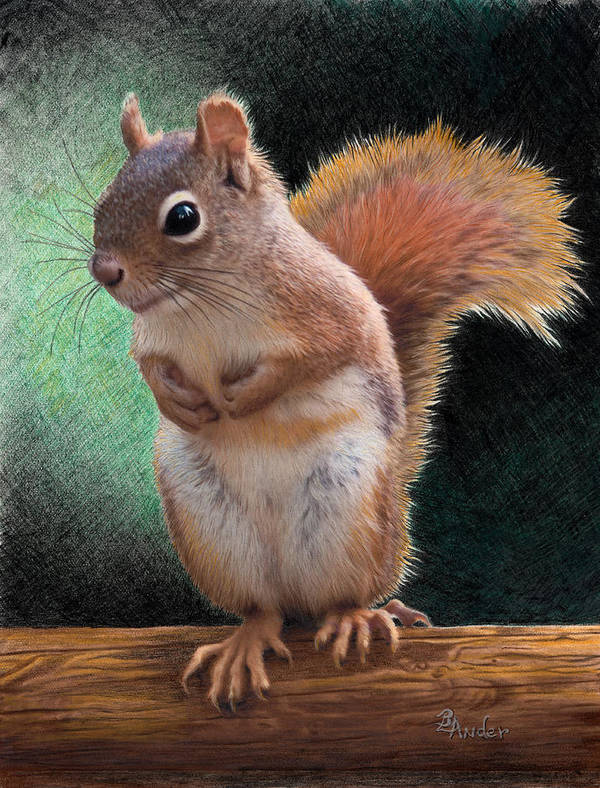 Squirrel Art Print featuring the drawing Please by Brent Ander