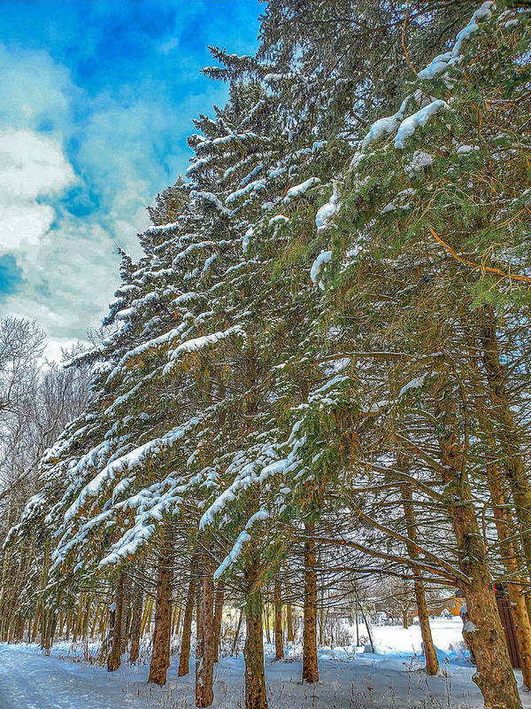 Nature Art Print featuring the photograph Winter trees by M Forsell