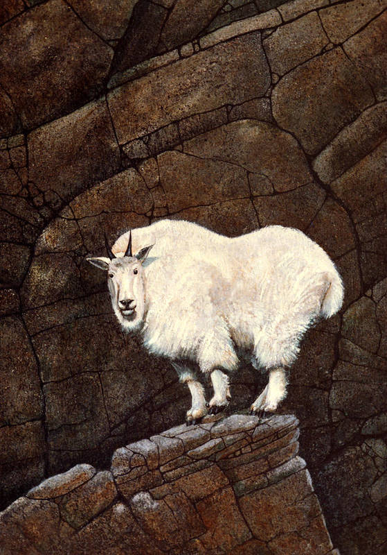 Wildlife Art Print featuring the painting Mountain Goat by Frank Wilson