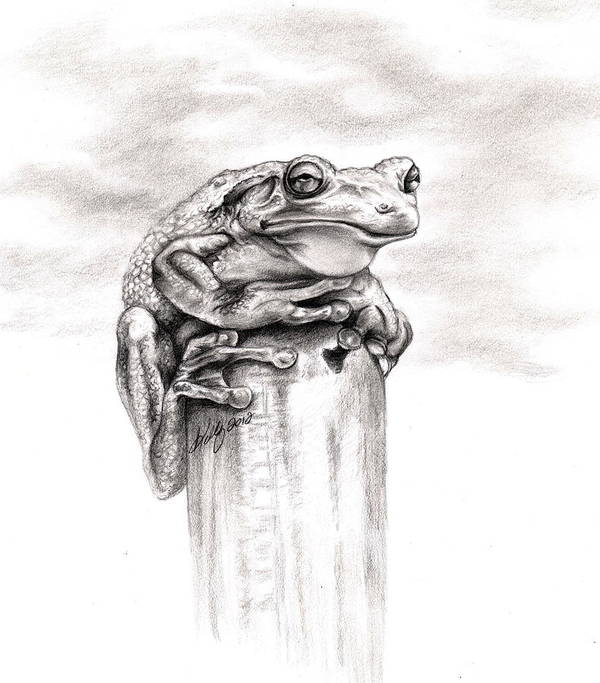 Frog Art Print featuring the drawing Batting Coach by Kathleen Kelly Thompson