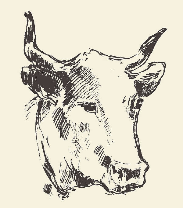Cow Head With Bell Dutch Cattle Breed Drawn Sketch Art Print
