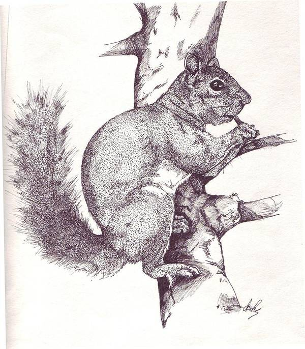 Squirrel Art Print featuring the drawing Grey Squirrel by Debra Sandstrom