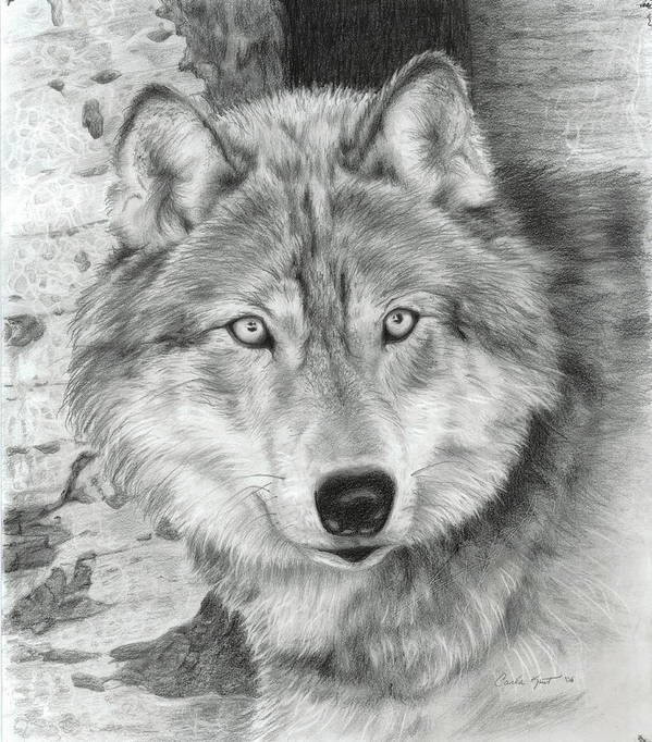 Pencil Art Print featuring the drawing Watchful Eyes by Carla Kurt